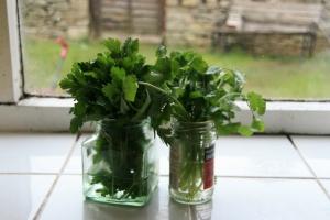 keeping store bought herbs for longer