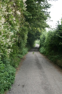 country lane, Wiltshire