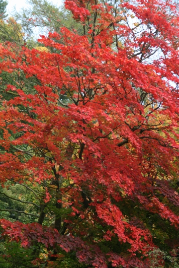 Westonbirt walk and Shinrin Yoku, Oct 2015