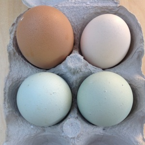 Multicoloured eggs pastel hens eggs